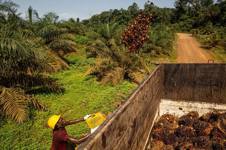 """Environnement: CROISSANCE SAINE dénonce """"les allégations mensongères"""" de MUYISSI."""